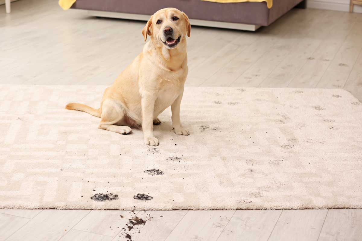 pet stains and damage to your area rug