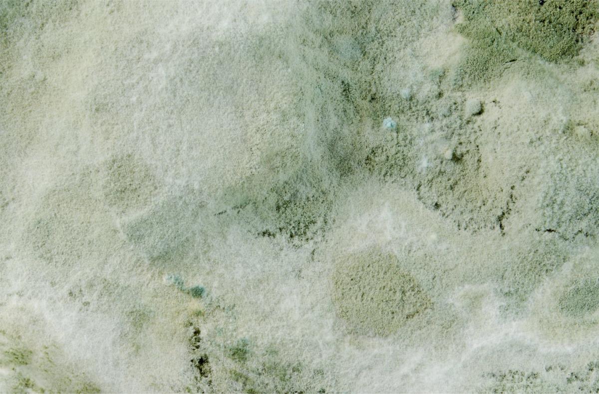 clean rug mold