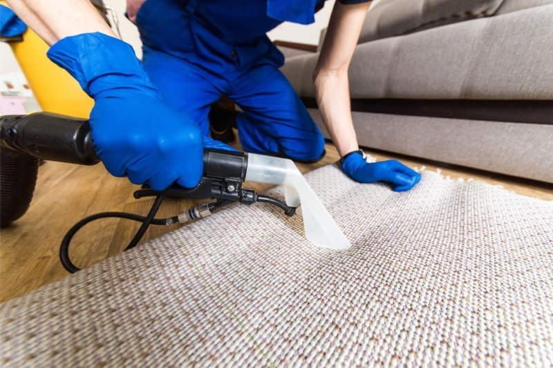 mold carpet clean